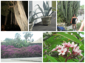 plants in  curacao