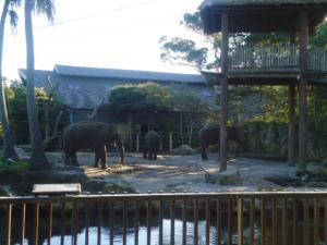 Elephants at Taronga Zoo