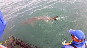 Shark diving in Gansbaai, South Africa (6)