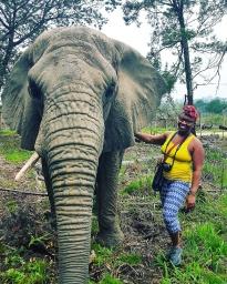 Knysna Elephant Park - Sally