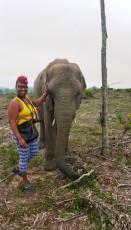 Knysna Elephant Park - Shungu