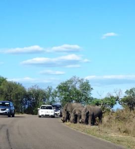 Kruger National Park rhinos