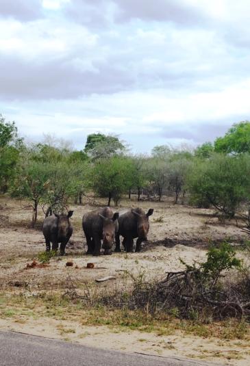 KrugerNationalPark (1)
