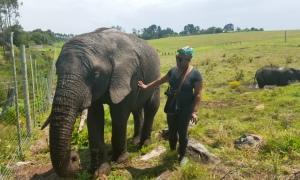 Kynsna Elephant Park - Mashudu